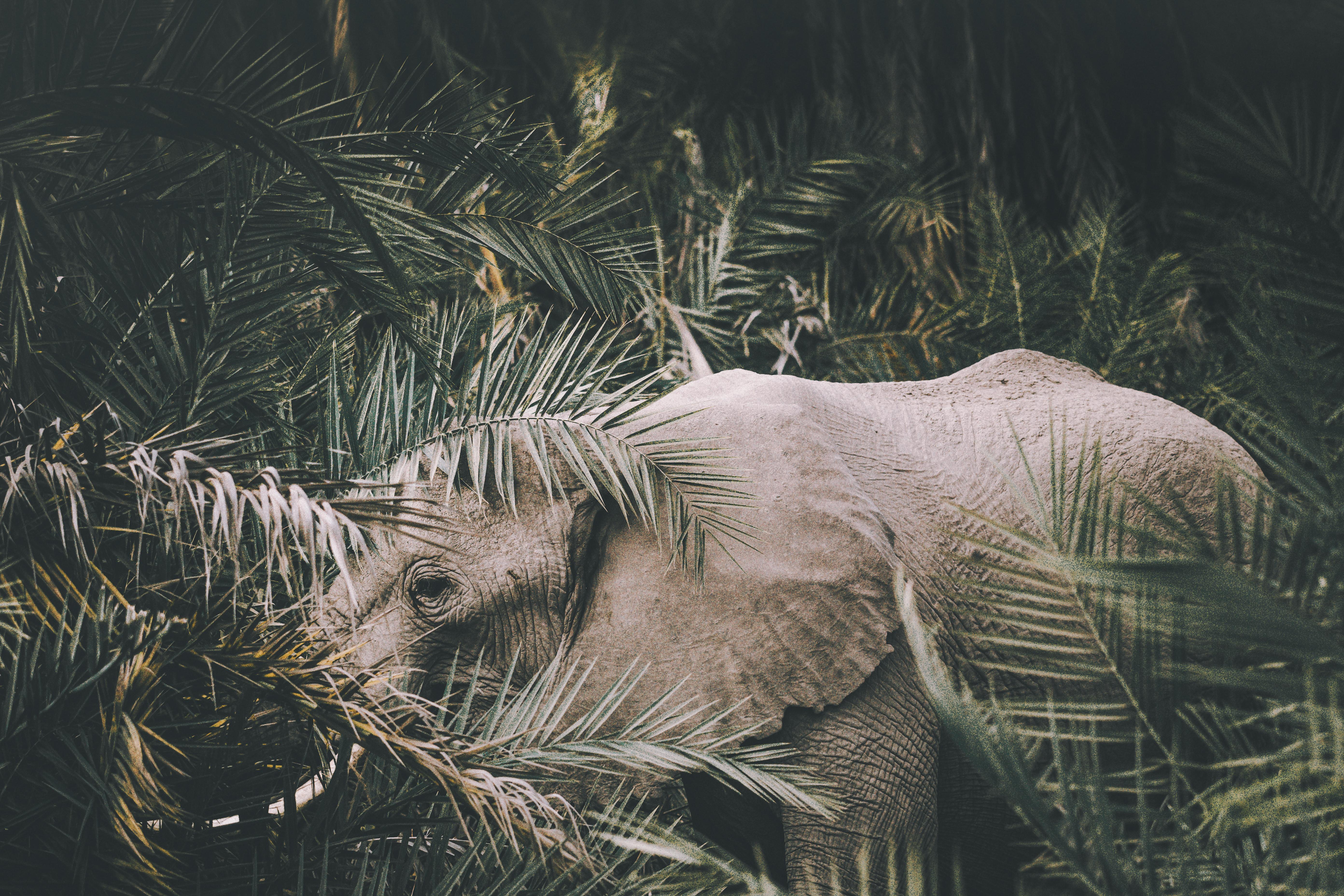 Elephant Amboseli Nationalpark Kenya