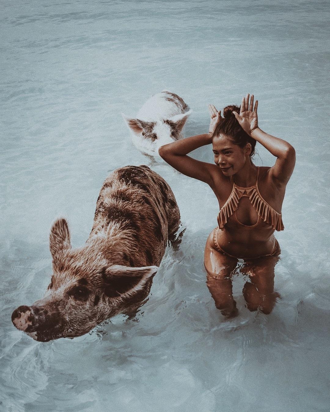 Die berühmten Hausschweine der Exumas.